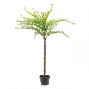 Potted Fern 122