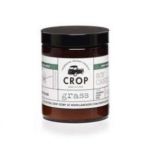 Crop Candle Grass