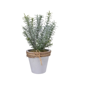 Frost Rosemary Planter