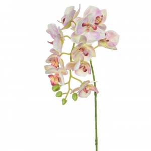 Orchid Phalaenopsis Small Branch Light Pink
