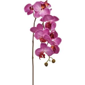 Orchid Phalaenopsis Small Branch Purple