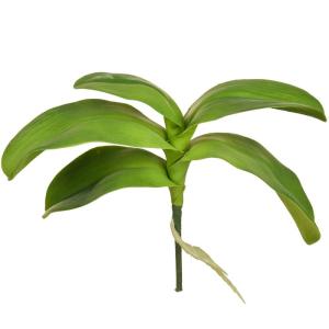 Leaf Orchid Phalaenopsis