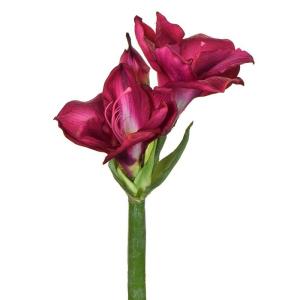 Amaryllis S Short Beauty