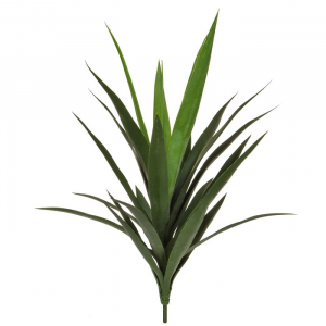 Plants Yucca Bright Green Leaves