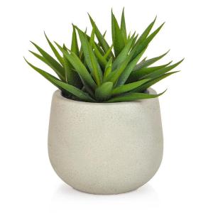 Small Aloe In White Pot