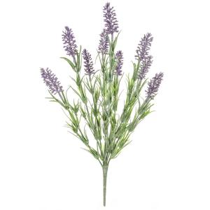 Plants Flowering Lavender Bush