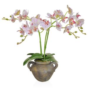 Phalaenopsis Orchid Pink White in Urn Jar