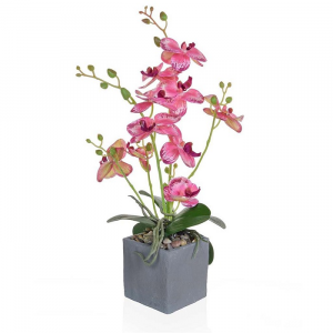 Phalaenopsis Orchid Pink/White In Slate Pot Small