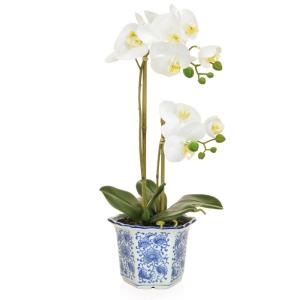 Phalaenopsis In Blue/White China Pot