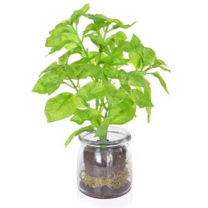 Green Basil In Vase Jar