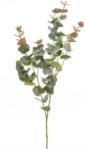 Foliage Eucalyptus Red 100
