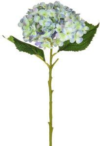 Hydrangea Small Pale Blue 52
