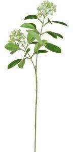Foliage Skimmia White 71