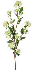 Foliage Guelder Rose Spray Green 108