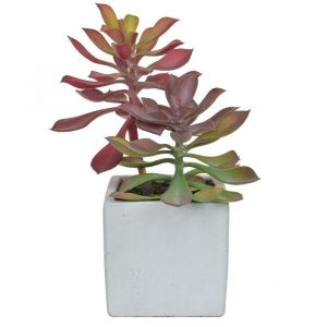 Succulent Green/Red In Pot 20