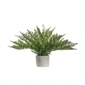 Potted Fern With Zigzag Pot