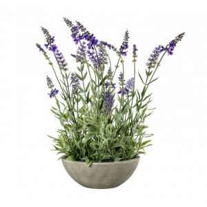 Potted Lavender Bowl Small