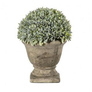 Boxwood With Stone Effect Urn Pot