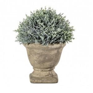 Cypress With Stone Effect Urn Pot