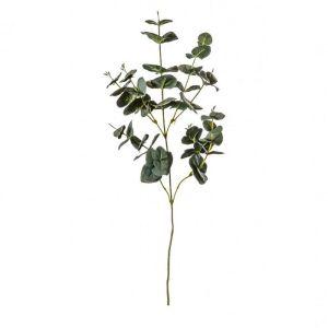 Eucalyptus Spray Green 75