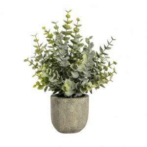 Eucalyptus With Rustic Small Pot