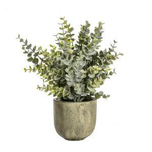 Eucalyptus With Rustic Large Pot