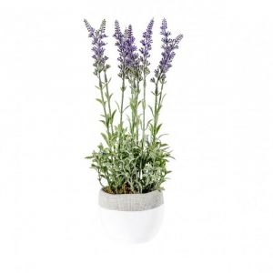 Lavender Lilac With White Pot Small