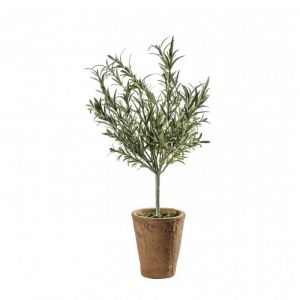 Lavender/Olive Tree with Clay Pot Tall