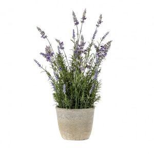Lavender Classic With Cement Pot Medium