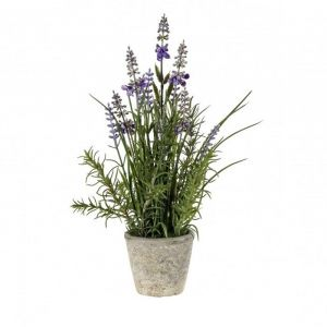 Lavender Classic With Cement Pot Small