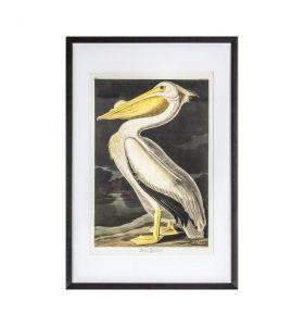 Inquisitive Pelican Framed Art