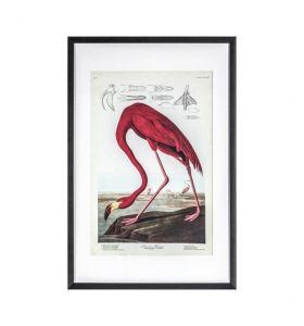 Curious Flamingo Framed Art