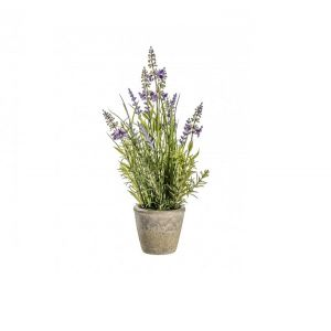 Lavender Classic with Cement Pot Large