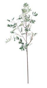 Green Olive Branch 149