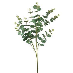 Eucalyptus Branches Large