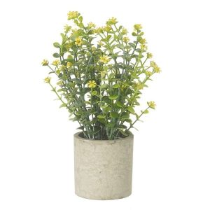 Yellow Flower Plant In Pot