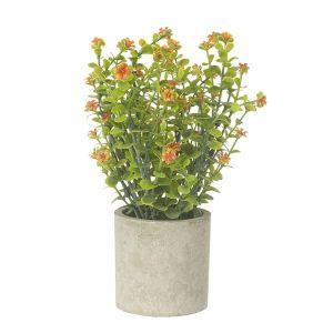 Flower Plant In Pot