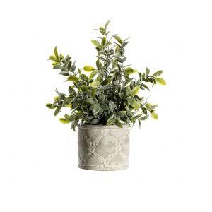 Sage Dusky Green with Patterned Pot