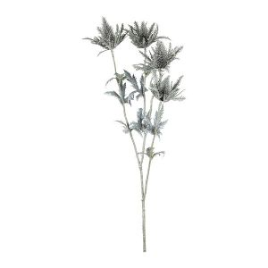 Silver Thistle Plant